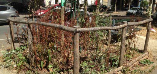 Tribune de l'art, végétalisation à Paris